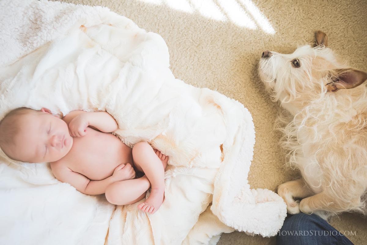 newborn and dog