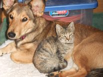 Maisy, with her pal Tigre