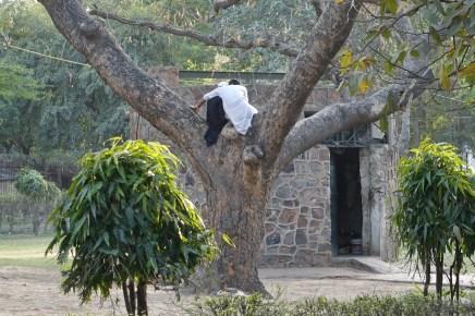 Humayuns Tomb -- boys in a tree