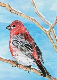 Pine Grosbeak Greeting Card watercolor by Janet Murphy