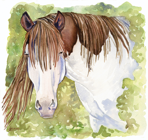 Achernar Abaco Pinto by Janet Murphy commissioned watercolor for Redbone Journal