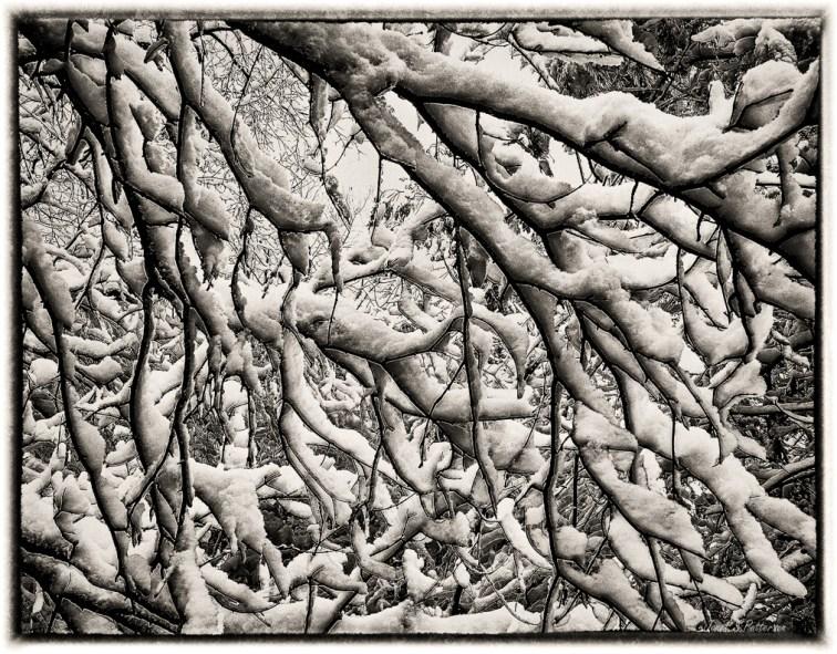 Winter, Snow, Trees, B+W