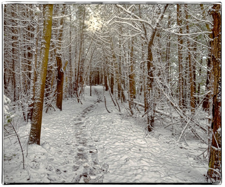 Winter, Snow, Trees, Trails