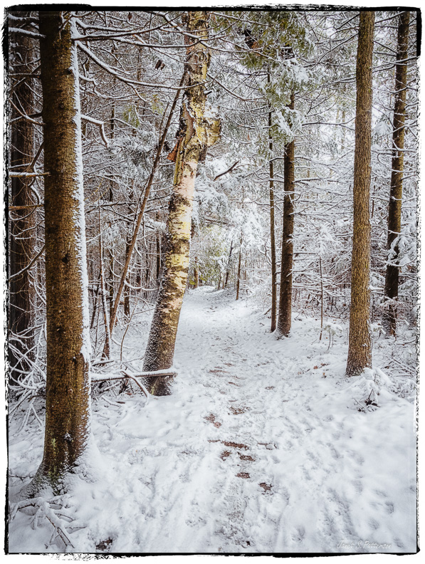 winter, snow, trees, Great Trail, trails