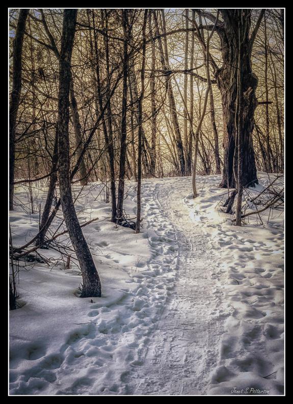Winter, Snow, Trees, Sun, Trails