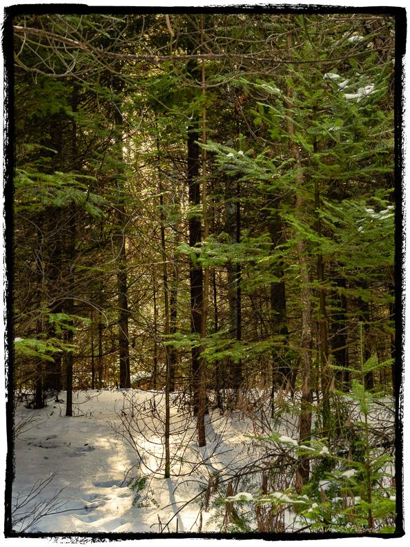 winter, sun, snow, trees, trails