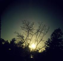 sun tree 2