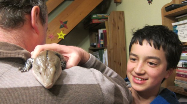 Father and son both think a skink (named Georgy) is appropriate to be kept in the lounge. (Have I told you the skink smells a little?)