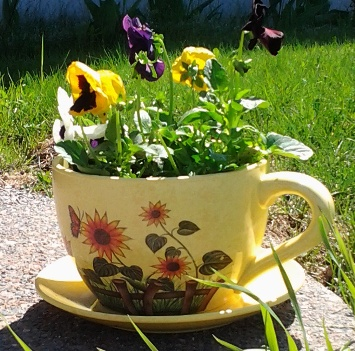 Teacup-shaped planter with pansies