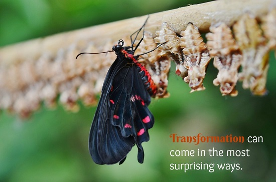 """Photo of butterfly, with the words """"Transformation can come in the most surprising ways"""""""