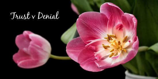 "Pink tulips with text ""Trust v Denial"" Image by Ralf Kunze from Pixabay"