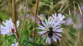 mason bee perhaps_edited-1