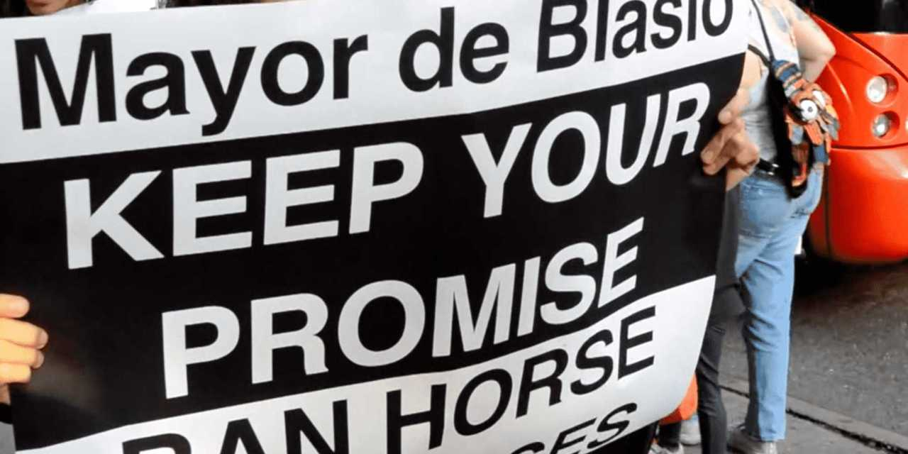 MESSAGE TO BIG APPLE'S MAYOR: STOP HORSING AROUND!!!    WATCH THE VIDEO!