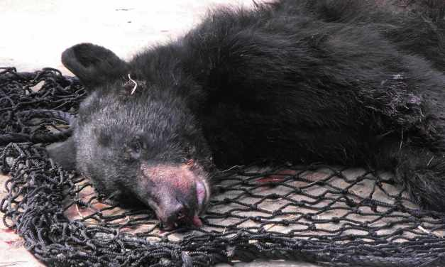 Bear Blood Spills Across the Sunshine State: Florida Governor Rick Scott's Disgrace!