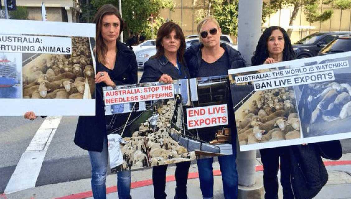 Stop Australia's Live Animal Export Horror