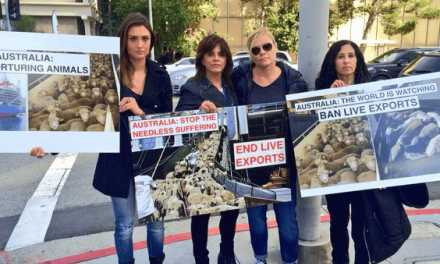 Stop Australia's Live Animal Export Horror