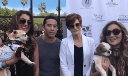 Fashion Unleashed to Save Dogs from Becoming Meat