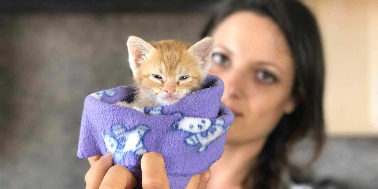 You Can Save Kittens and Puppies from Death Right Now