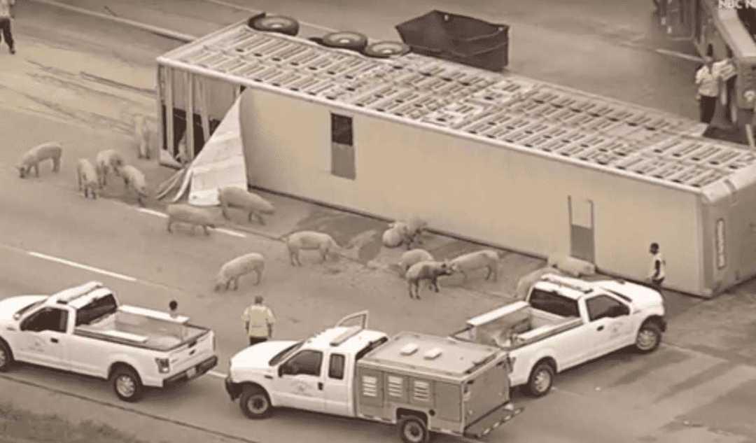 Dallas Animal Save 2