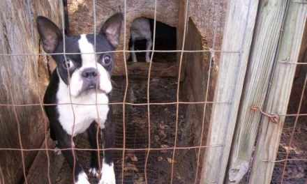 Help End Puppy Mills Now!