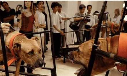 Guggenheim: Have a Heart! Suffering of Animals is Not Art!