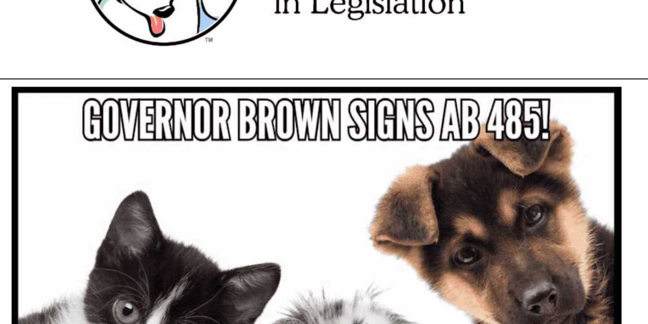 Pet Rescue & Adoption Act is Now Law! Major Victory for Animals & Activists!
