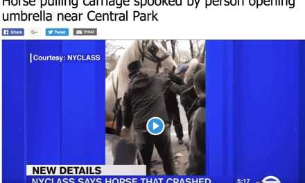Yet Another NYC Carriage Horse Crash!