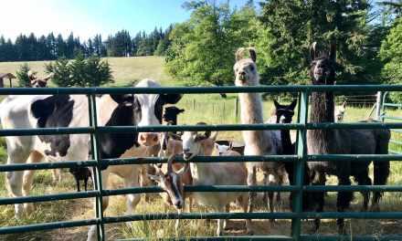 Happy Animals Eating Their Veggies!