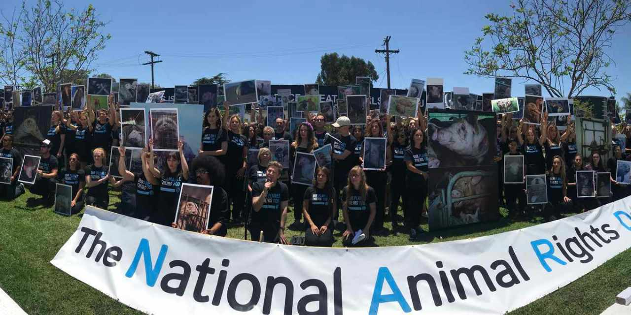 National Animal Rights Day Observed Around the World!
