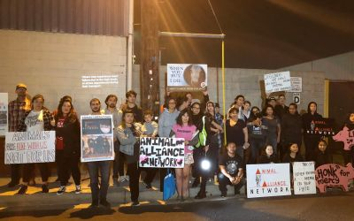 There are no Holidays for Protesters on the Front Lines of Animal Rights Activism