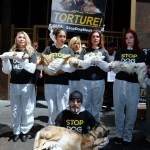 You Can Help End Dog Meat Forever!