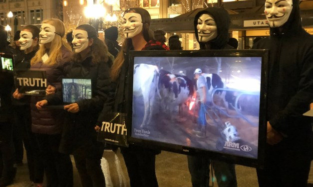 The Largest Cube of Truth Ever in Utah!