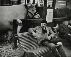 andre-kertesz-man-reading-with-cow-1369401889_org