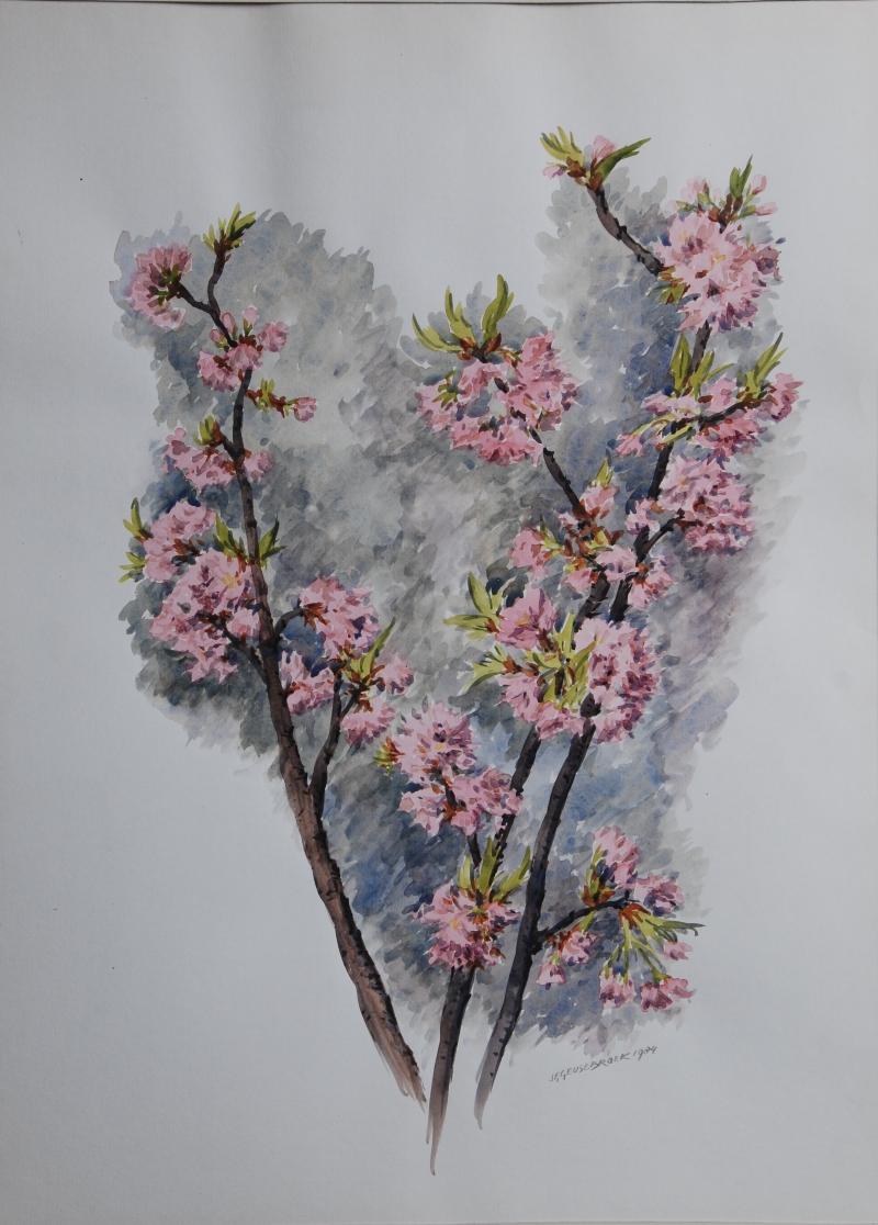 Japanse Kers 1984 door Jan Geusebroek (173)