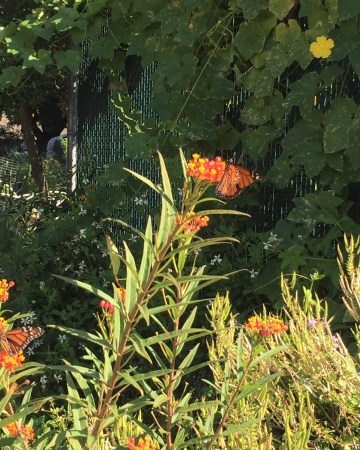 pollinators are attracted by flowers