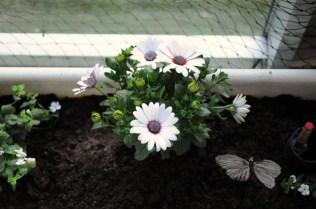 Vitt blomster