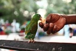 A man feeds his flightless bird