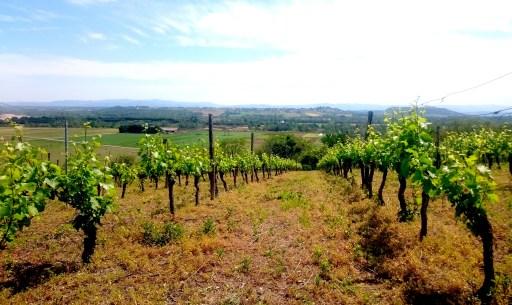 Ein kleiner Weinberg in der Nähe von Pont-du-Château.