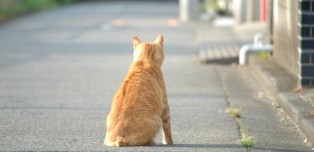 猫背 発声を阻害する