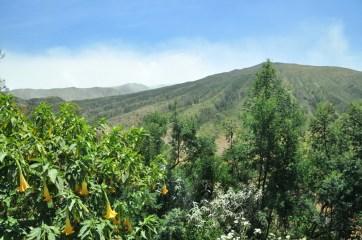 Mijamy tereny ukształtowane przez pracę kilku okolicznych wulkanów. Przy okazji: w lewym dolnym rogu: kącik zieleni: kwiaty datury.