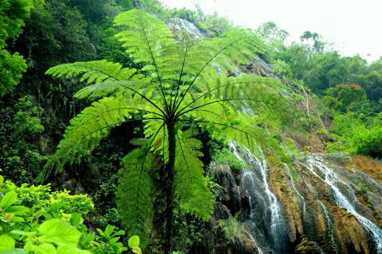 "Szósty kącik botaniczny: ""zielony parasol"" a w tle wodospad Goa Tetes."
