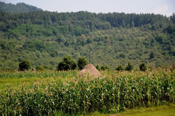 Wjeżdżamy w dolinę Izy, marmarowską perełkę z drewnianymi bramami i bisericami.