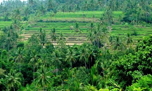 Z Pemuteran, burżujsko, wynajętą taksówką (niestety turystyczne Bali zmusza do takich kroków), jedziemy w interior. Jedziemy 120 km, więc...