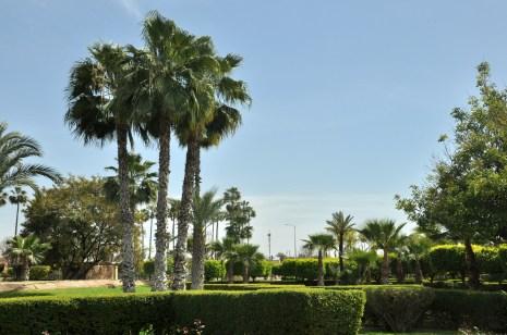Marrakesz nie jest zbyt zielony, ale ma sporo przyjemnych ogrodów. I ma palmy...