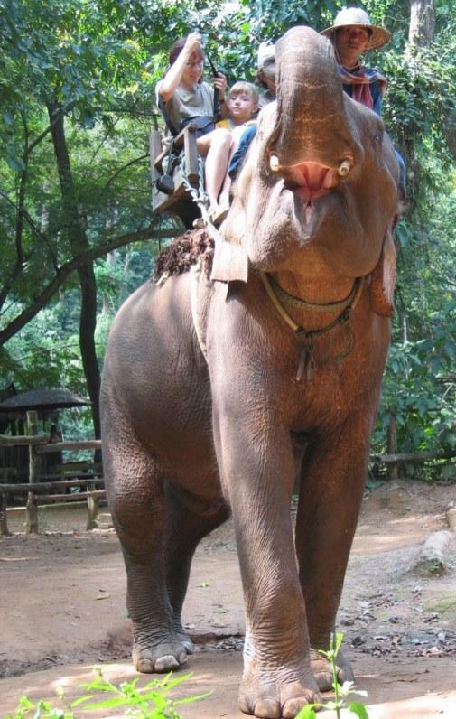 Taki czysto turystyczny i oklepany kaprys: ruszamy w dżungiel...
