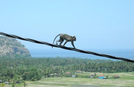 Zapomniałam: na Bali sporo dzikich małp.