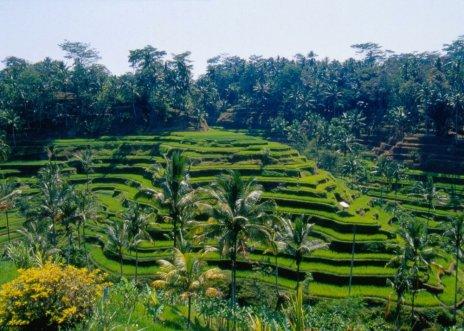 Indonezja – Bali dawno temu
