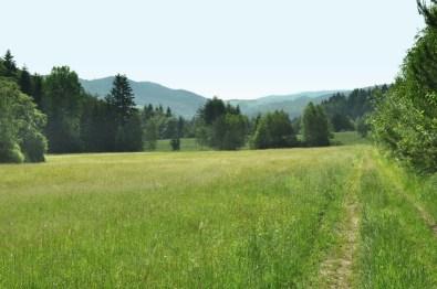 Innego dnia: wreszcie słońce! Ruszamy łąkami, przez przełączkę do Bielicznej.