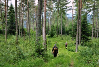 Chodzimy poza szlakami, dlatego na męską intuicję schodzimy tak jakoś w stronę Czertyżnego.
