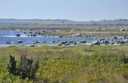"""Najbardziej wysunięty na południowy-wschód punkt Szwecji. Taki """"kraniec świata"""". No i są tu owce, ..."""